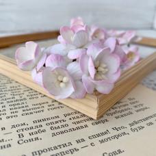 Цветок вишни, розовый/белый