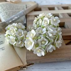 Цветок вишни средний, белый цвет