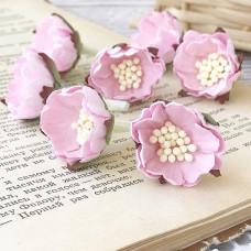 Цветок шиповника, цвет розовый