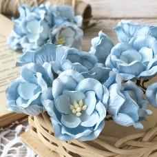 Цветок магнолии, голубой цвет
