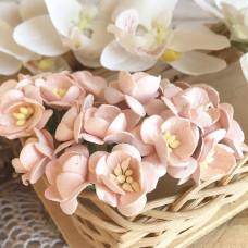 Цветок вишни, розово-персиковый светлый цвет
