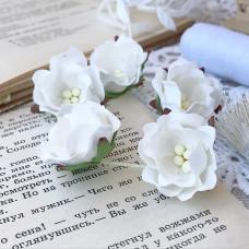 Цветок яблони, белый