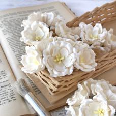 Цветок магнолии, белый цвет