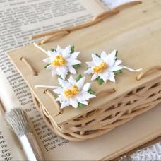 Пуансетии маленькие, цвет белый