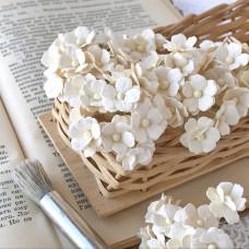 Цветок вишни средний, молочный